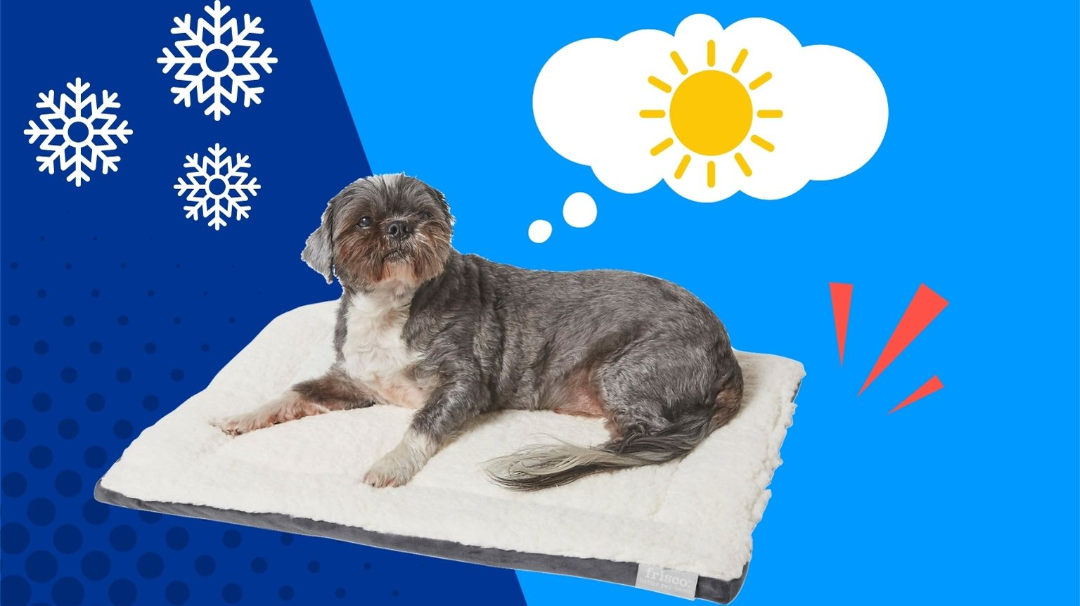 Cold dog on a heated dog bed.