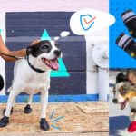 Best Dog Boots