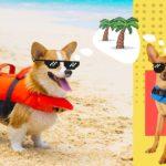 Best Dog Life Vests