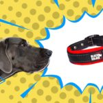 Best Collars for Large Dogs