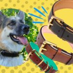 Best Leather Collars