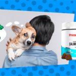 Best Dog Calming Treats