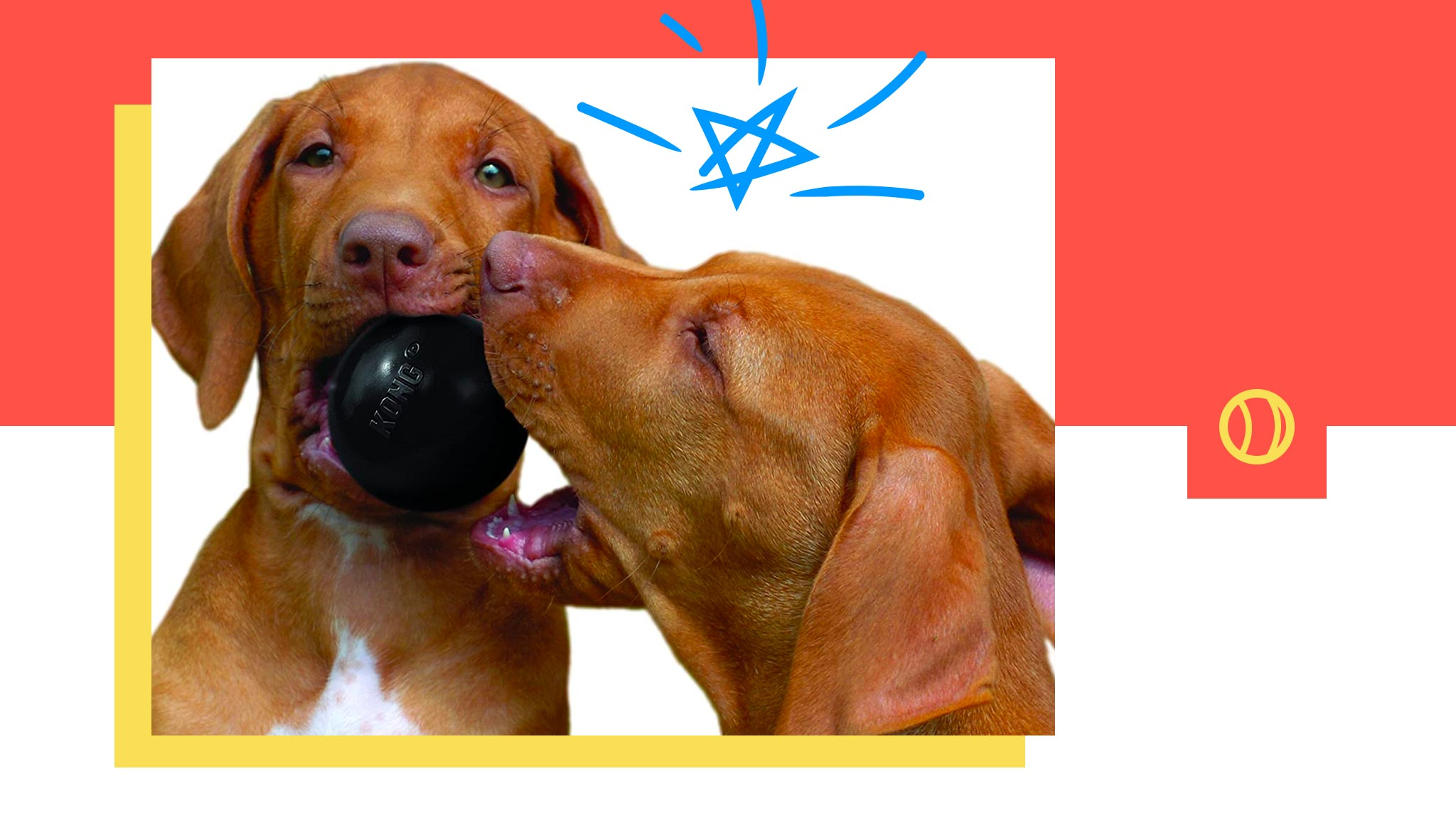 Essential Dog Chewing Problems Fixes
