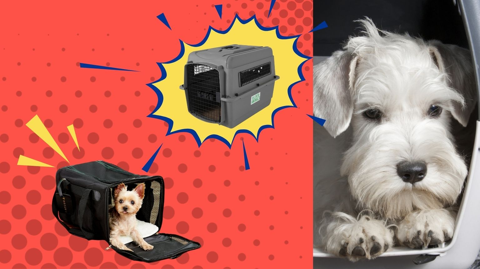 Dogs in airline-approved pet carriers.