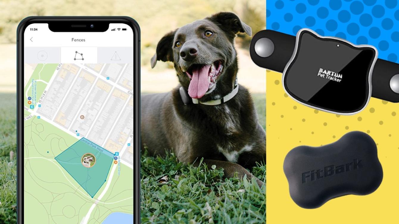 Dog Activity Trackers