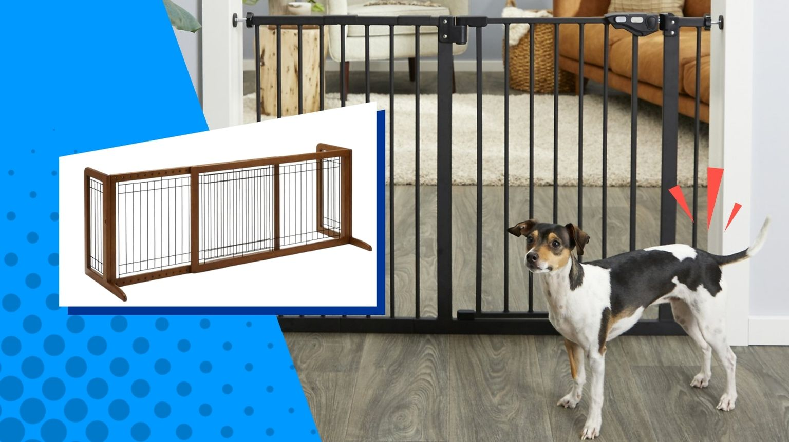 Small dog in front of black dog gate.
