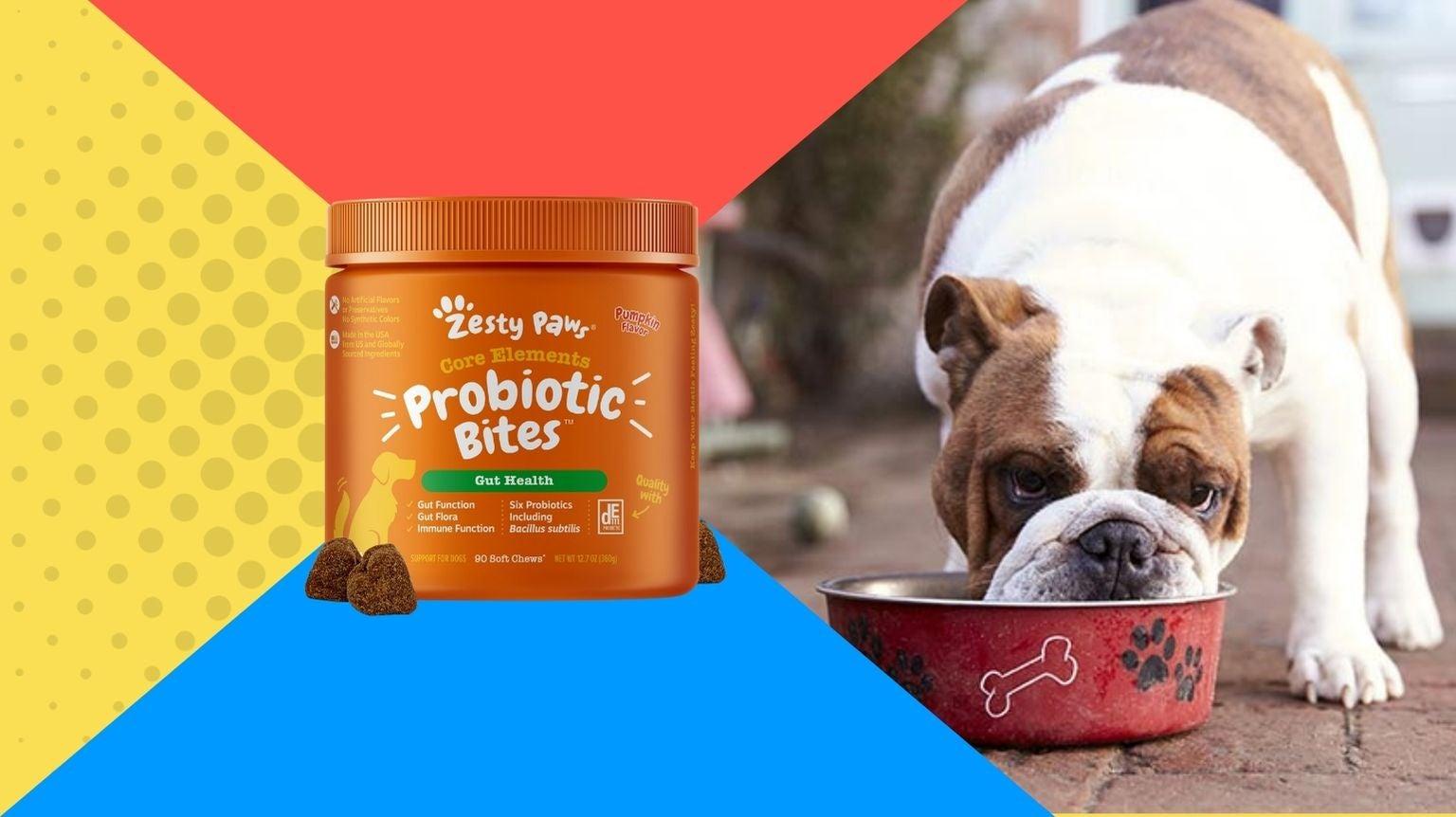 Bulldog eating food with dog probiotics.
