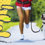 Best Hands-Free Dog Leashes