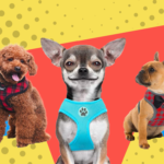 Best Small Dog Harnesses