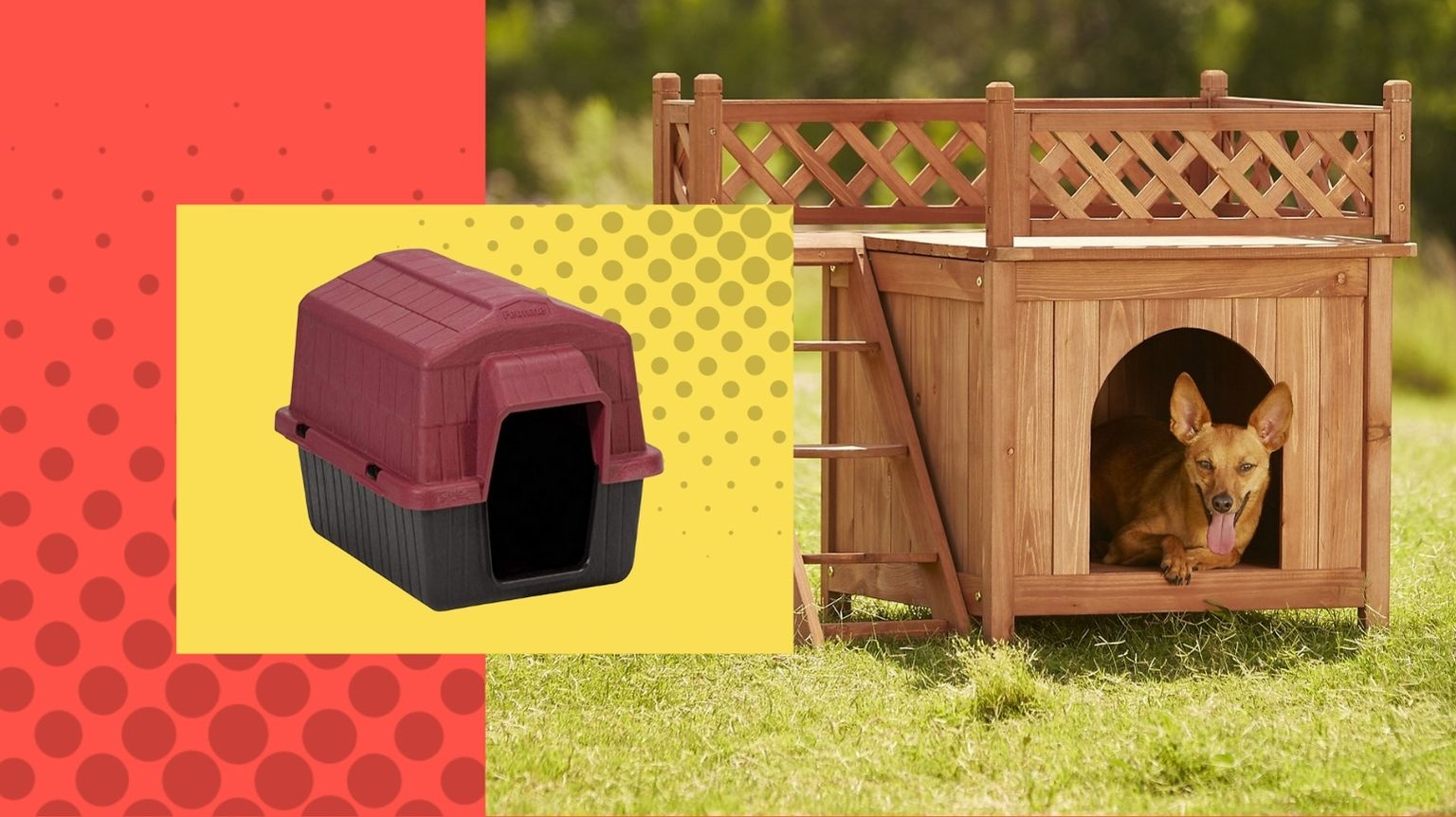 wooden dog house outside with Chihuahua