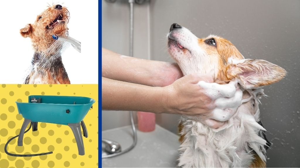 Dog washers next to dog getting washed by a groomer.