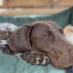 GSP on bed outdoors