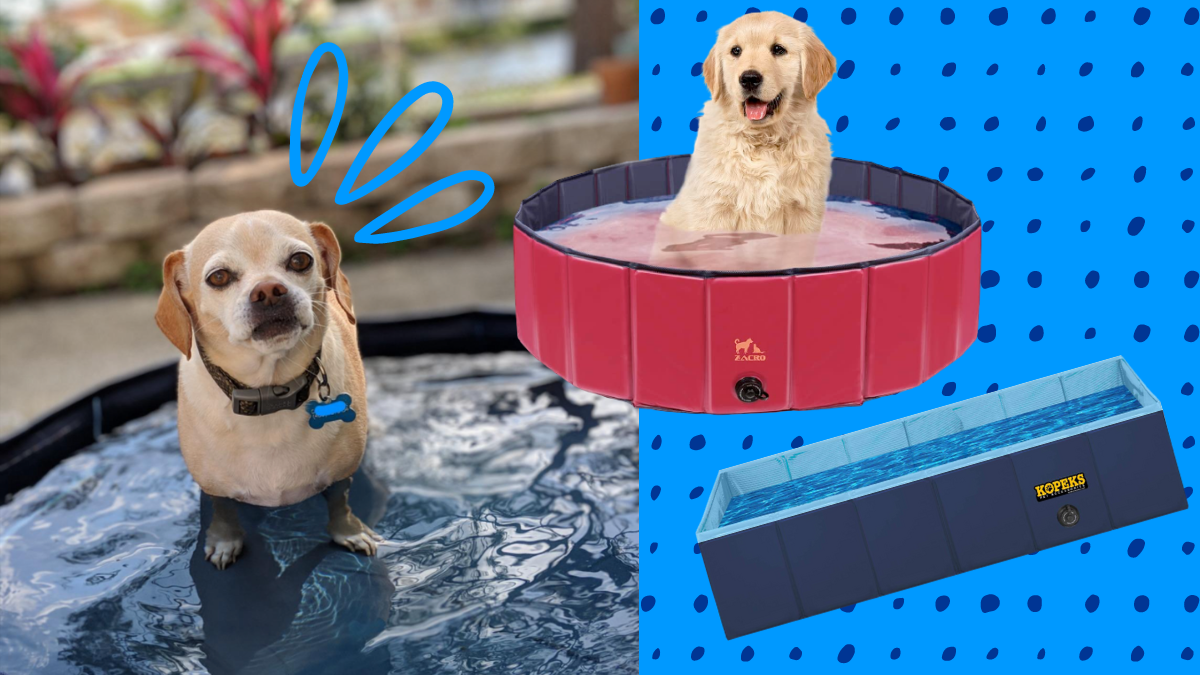 small dog in a dog pool