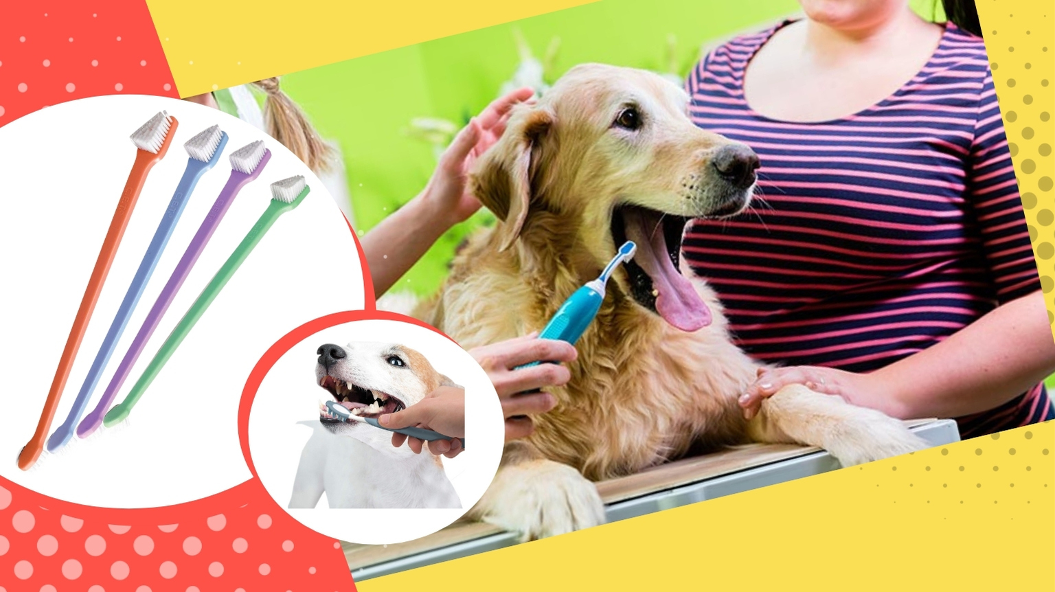 Golden Retriever using a dog toothbrush at the groomers.