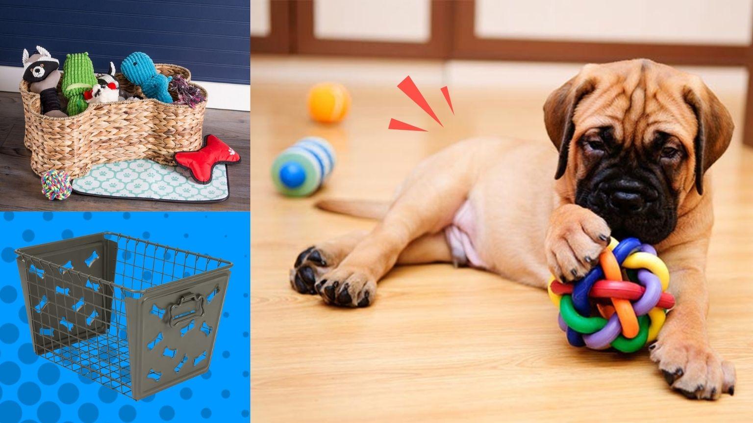 Mastiff next to dog toy storage boxes