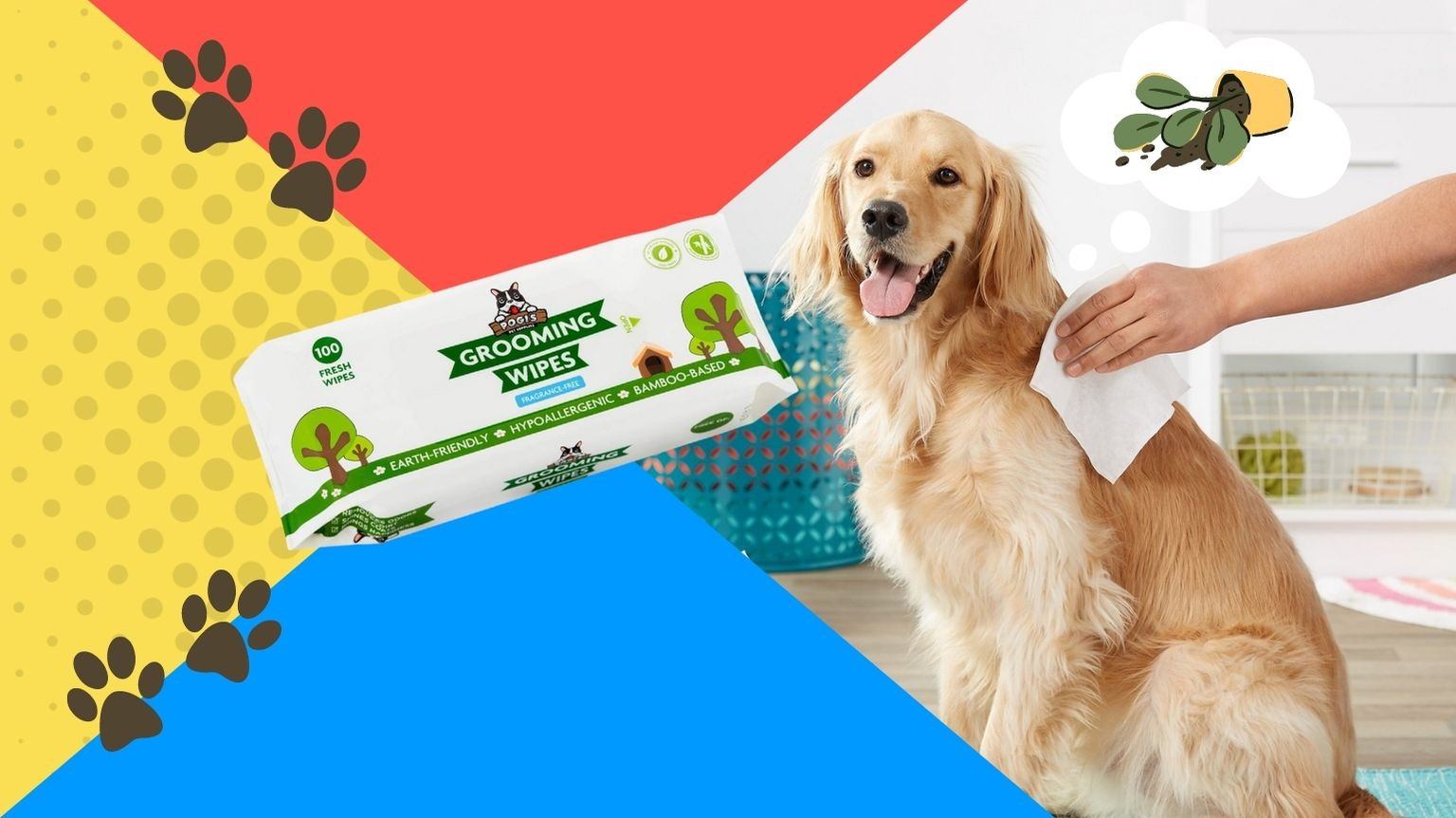 Golden Retriever getting cleaned with dog wipes.