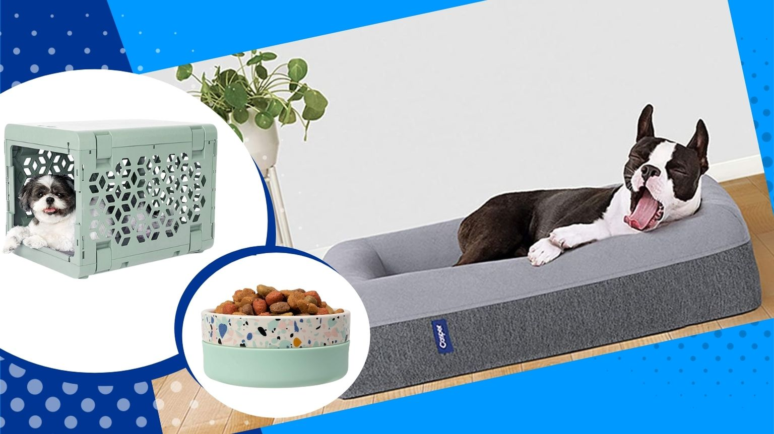 Boston Terrier surrounded by stylish dog products